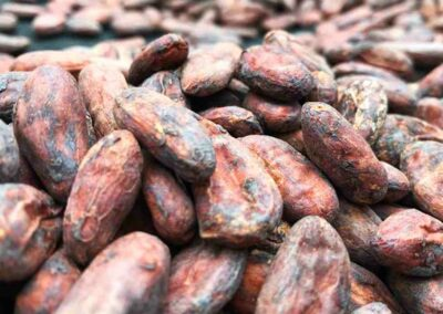 cacao bean close up min
